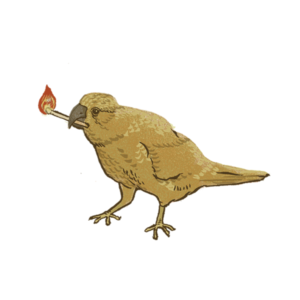 Drawing of a brown bird holding a lit match in its beak